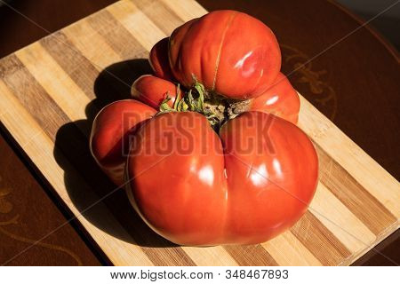 Colorful Juicy Ugly Tomato