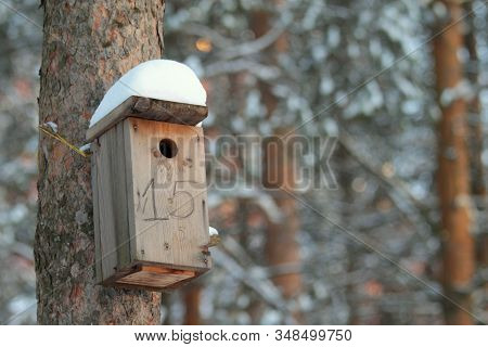 Wooden Birdhouse Hanging On Tree In Park On Clear Winter Day. Concept Of Caring For Animals, Helping
