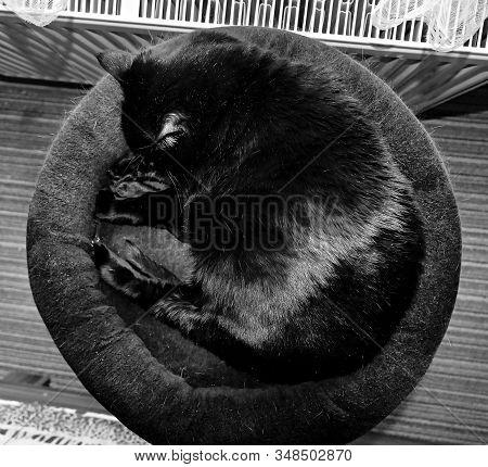 Chomutov, Czech Republic - January 10, 2020: Black Cat Violka Sleep In Bedroom
