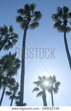 Tall Palm Tree Silhouettes In Front Of The Blue Sky And The Bright Sun, Back Lit