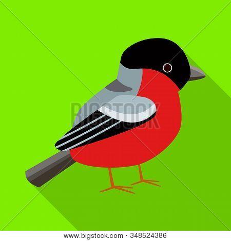 Vector Illustration Of Bullfinch And Bird Symbol. Set Of Bullfinch And Robin Stock Vector Illustrati