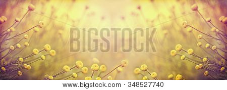Selective And Soft Focus On Yellow Flower In Meadow