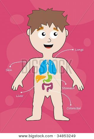 Medical Infographics. Boy With Internal Organs