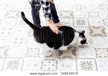 Boy Stroking Black And White Cat At Home. Sensorial