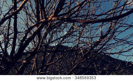 Imagem Tendo Céu E Montanha Como Plano De Fundo De Uma árvore Sem Folhas