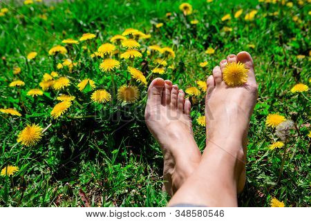 Bare Womans Feet On The Grass With Yellow Dandelions