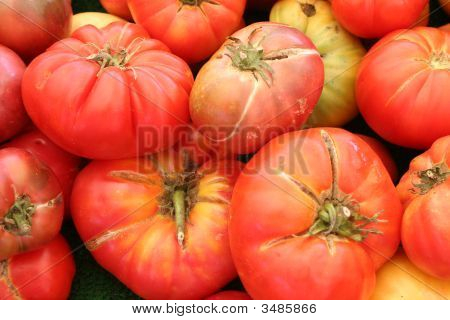 Diverse Tomatoes