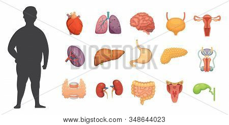 Vector Internal Organs Collection In Cartoon Style. Anatomy Of Human Body. Man Biology Organ: Heart,