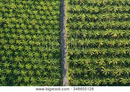 Road through oil palm plantation