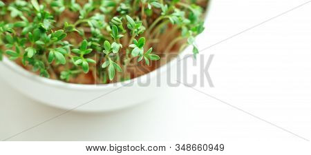 Watercress Salad It Bowl On White Background. Microgreens Growing. Healthy Eating Concept. Close-up