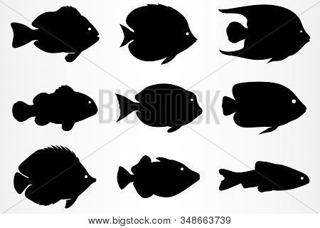 A Set Of Nine Different Fish Icons. Marine And Aquarium Fish. Vector Illustration.
