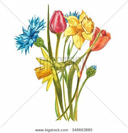 Watercolor Narcissus With Tulips And Dahlias. Wild Flower Set Isolated On White. Botanical Watercolo