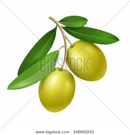 Vector Realistic Olive Branch With Two Green Olives