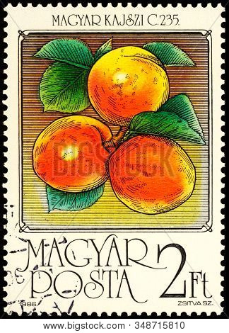 Moscow, Russia - February 01, 2020: Stamp Printed In Hungary Shows Apricots Magyar Kajszi, Series