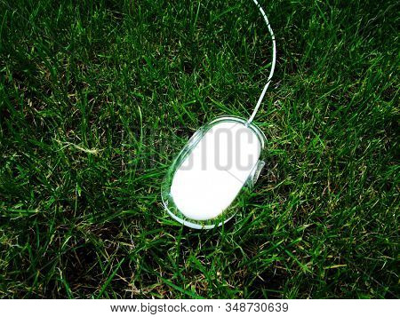 white computer mouse on grass
