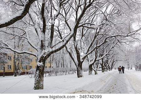 Snow-covered Trees In A City Park. Fairytale Winter Landscape