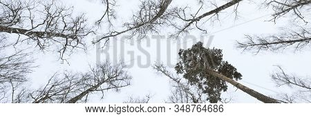 Banner Of Sky With Winter Forest. Great Background With Copyspace. Nature Landscape. Stock Photo.
