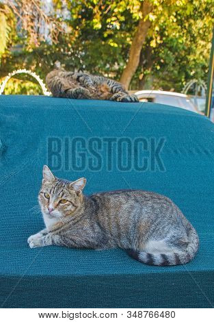 Street Cats In Kadikoy 2