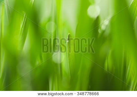 Water Drop On Grass Blade Against Blurred Background, Closeup