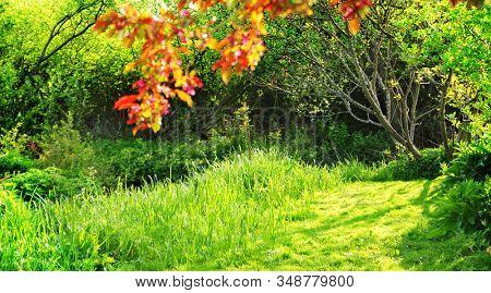 Lush green grass on spring day