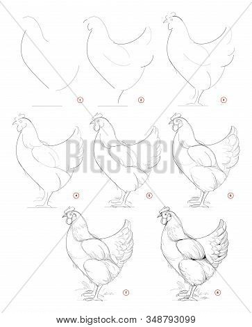How To Draw Sketch Of Imaginary Domestic Hen. Creation Step By Step Pencil Drawing. Education For Ar