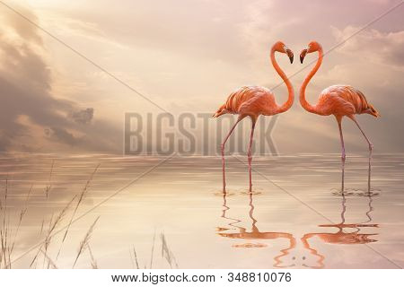 A Pair Of Pink Flamingos Making A Heart Shape In Reflection Pond. Love Concept
