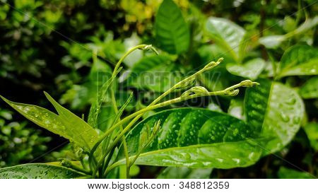 This Is A Small Growing Branch Of A Creeping Plant.