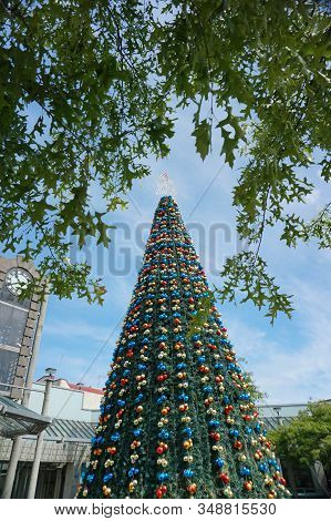 Big Christmas Tree In The City Center Of Invercargill New Zealand