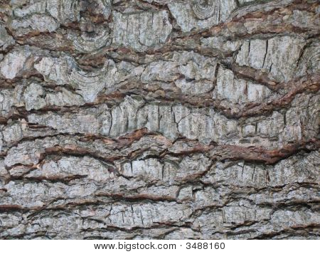 Rough Wood Skin