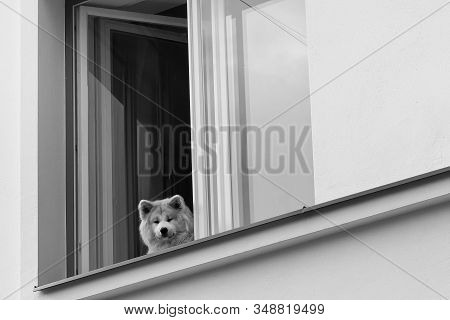A Dog Watches The People Passing By From A Window In Tallinn, Estonia. The Dog Seems To Be Smiling A