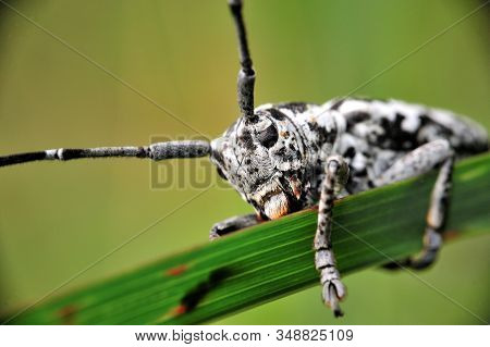 The Eye Insect Black Color. Close Up Of The Insect Which Perched On The Leaves. Selective Focus In T