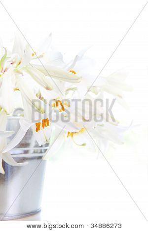 Bright White Lily