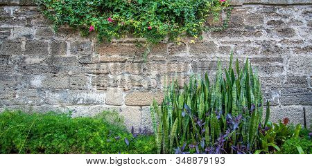 Plants And Flowers Growing Along A Stone Wall