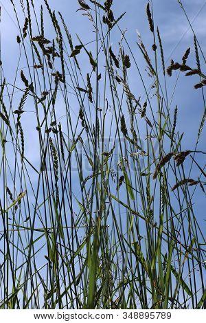 Groen, Gras Tegen De Blauwe Nederlandse Luchten