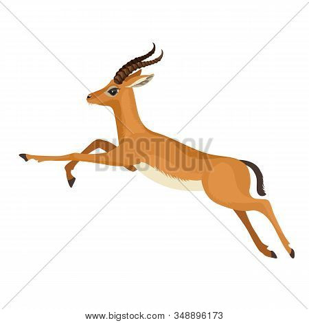 Gazelle Or Antelope With Horn Running In Wildlife. African Mammal Animal. Vector