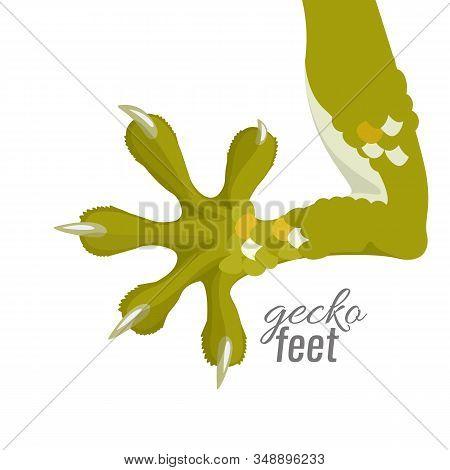 Gecko Feet. Reptile Lizard Animal Foot. Vector