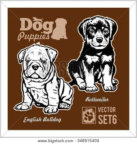 English Bulldog And Rottweiler - Dog Puppies. Vector Set. Funny Dogs Puppy Pet Characters Different