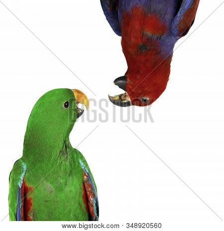 Beautiful Blue And Yellow Macaw Parrots Isolated On A White Background