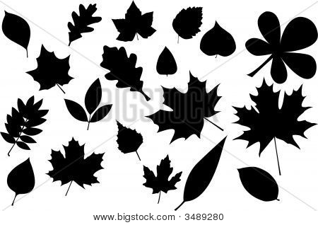 Leaves Silhouette