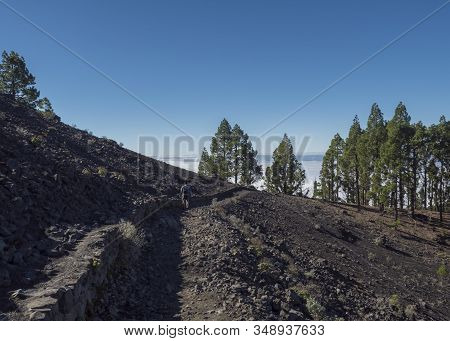 Volcanic Landscape With Lush Green Pine Trees, Volcanoes, Lava Rock Field And Men Hiker At Path Ruta