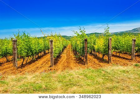Vineyard Plantation, Mountain In Background, Sunny Summer Day, Countryside Landscape, Dalmatian Inla