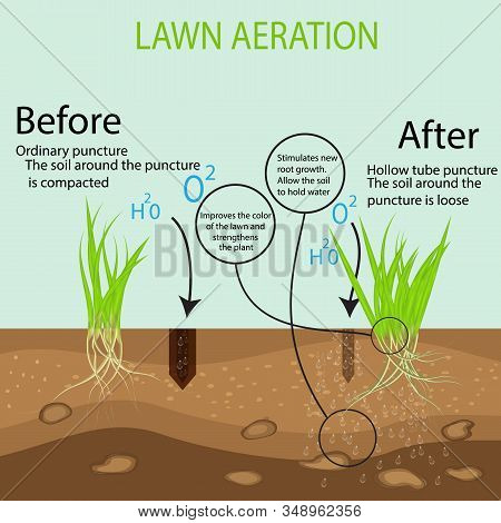 Gardening Of Lawns, Landscape Design Services. Vector Illustration. Green Lawn On The Ground In The