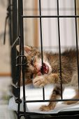 Rescue kitten wants go out from the cage poster