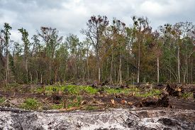 The Deforestation Of Land For Development In Florida.