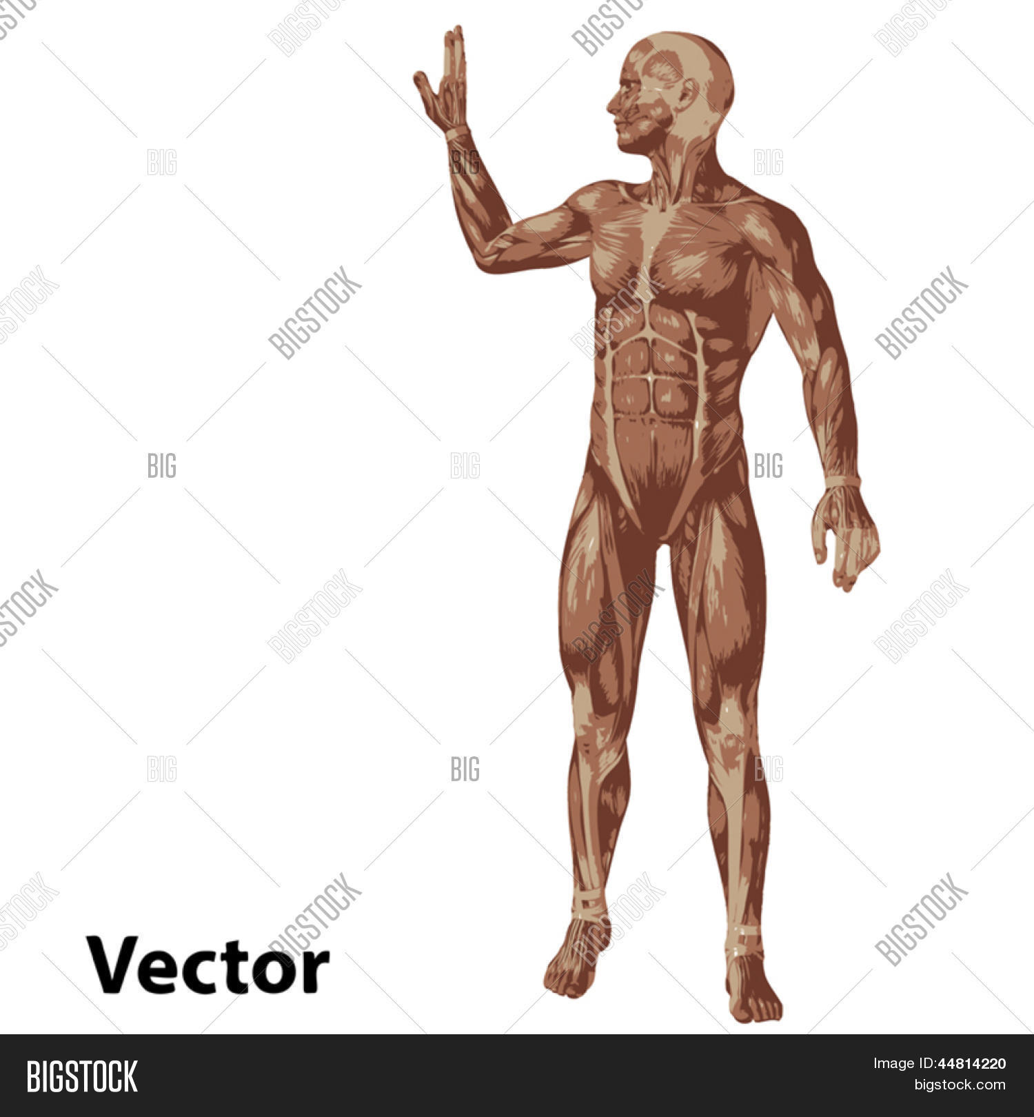 Strange Vector Eps Concept Vector Photo Free Trial Bigstock Wiring Cloud Hisonuggs Outletorg
