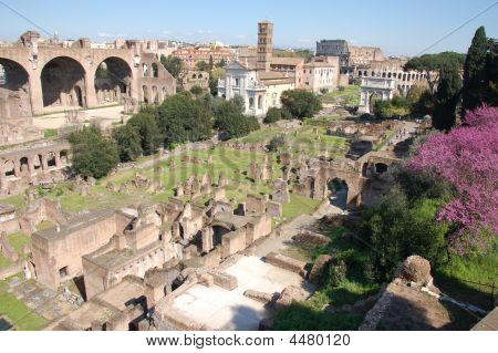 The Forum In Springtime