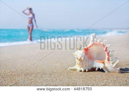 Svelte Blond Girl In White Bikini On The Sea Sandy Beach With Big Shell