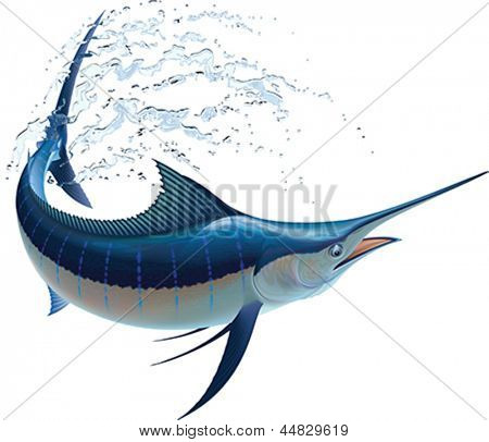 Blue marlin swinging in water sprays. Realistic vector illustration. Isolated on white background.