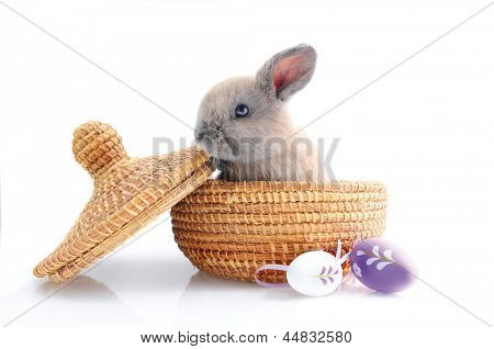 Cute baby bunny in basket with purple easter eggs, isolated on white
