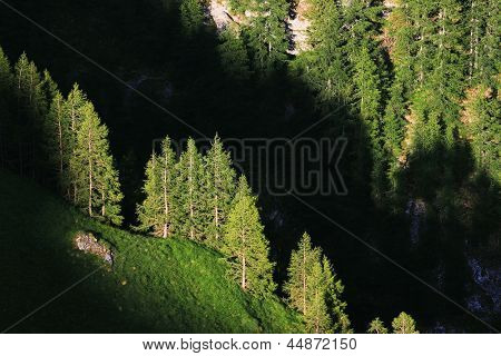 Summer forest landscape